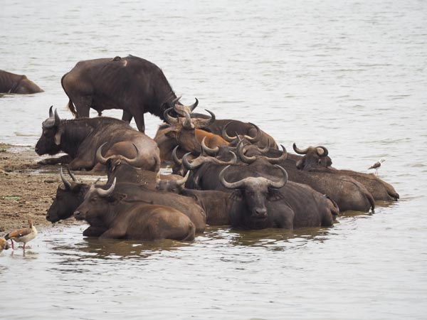 uganda small group tours, uganda group tours, kanzinga channel, kazinga boat cruise