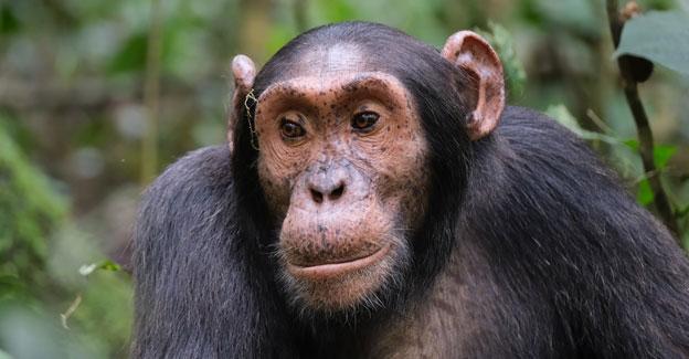 7 days rwanda safari, 7 days in rwanda, 7 day rwanda, 7 days rwanda gorillas, 7 days rwanda wildlife