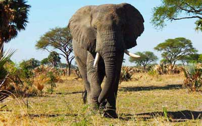 uganda small group tours, uganda group tours, queen elizabeth natioal park, elephants in queen