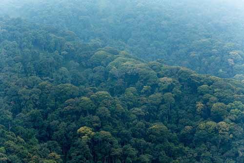 10 day rwanda itinerary, 10 day rwanda tour, Nyungwe forest national park, nyungwe forest, nyungwe canopy walk, rwanda canopy walk, Chimpanzee tracking Rwanda, Nyungwe forest chimps, chimpanzee trekking Rwanda, nyungwe national park, Gorilla trekking rwanda, gorilla tracking rwanda, rwanda gorilla trekking, rwanda gorilla tracking, gorilla safaris, best rwanda gorilla tours, gorilla trek rwanda, gorilla trekking tours, gorilla trek rwanda volcanoes national park