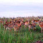 3 days murchison falls safari, uganda lions, uganda big five animals safaris murchison falls national park big five safaris, Uganda Rhino safaris, Uganda adventure safaris, ziwa rhino sanctuary, murchison falls national park safari, 3 day murchison falls, uganda giraffe, murchison falls