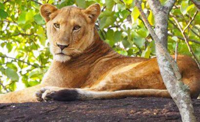 4 days kidepo national park, kidepo national park tour, kidepo safari, kidepo valley national park safari, kidepo national park animals, kidepo national park activities, kidepo national park brids, kidepo national park tours