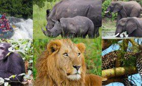 gorilla videos, wildlife videos
