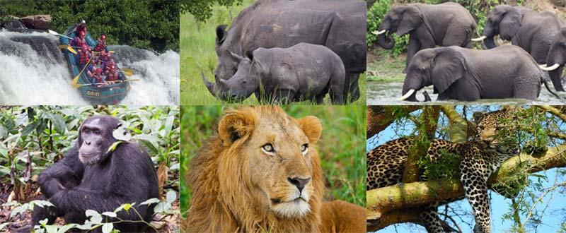 10 days uganda wildlife adventure, 10 days uganda, 10 days uganda safari, 10 days itinerary uganda, uganda wildlife, best uganda safari