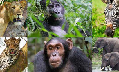 15 days uganda tour, 15 days uganda safari, uganda wildlife safari, Uganda safari, Uganda tours, Uganda safari tours, 15 days uganda itinerary, Uganda itinerary