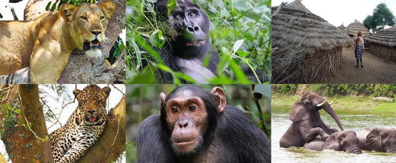 24 days uganda, 24 days uganda safari, 24 days uganda tour, uganda long tours, uganda group tours, uganda gorilla tours