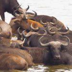 7 days uganda rwanda safari, 7 days uganda rwanda tour, uganda rwanda tours, uganda rwanda safari