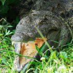 7 days uganda rwanda safari, 7 days uganda rwanda tour, uganda rwanda tours, uganda rwanda safari, crocodile in queen elizabeth