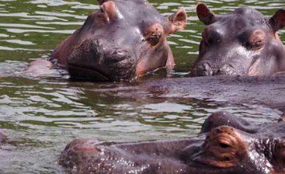 5 days rwanda safari, 5 day rwanda safari, 5 days rwanda tour