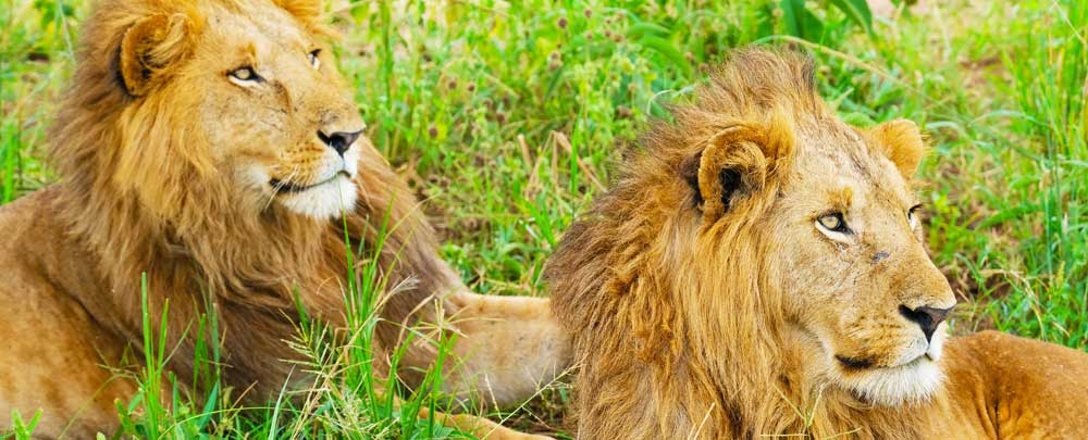 uganda destinations, rwanda destinations, uganda tour destinations, rwanda tour destinations, uganda lions