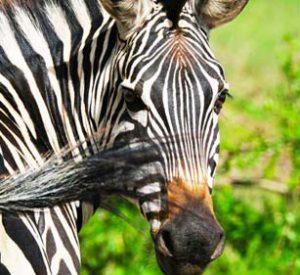Akagera national park, akagera national park rwanda