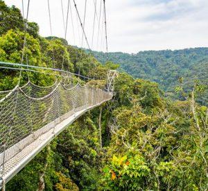 nyungwe forest canopy walk, nyungwe canopy walk, nyungwe forest national park, nyungwe canopy, nyungwe forest