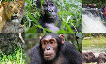 8 days uganda tour, 9 days uganda safari, uganda wildlife, gorilla trekking safari, uganda safaris, safari tours uganda, uganda safari holidays